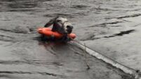 PHOTOS: Animal rescue charity save donkey from Kerry flood