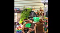 VIDEO: This parrot does an amazing cover of that song from The Lego Movie