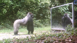 VIDEO: These jungle animals can't get enough of their own reflection