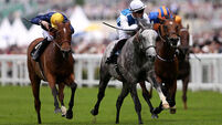 Solow wins Ascot opener