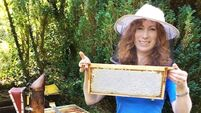Family business taps Irish honey bee