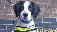 Detector dogs Casey and Harvey help find almost one million smuggled cigarettes