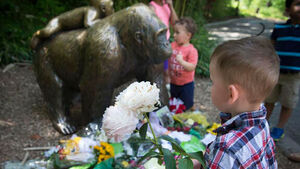 Zoo where gorilla was shot closes Twitter accounts