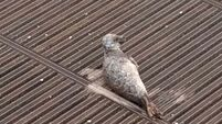 Stranded seal rescued in west London