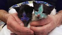 Permanent marker shocker gives kitten rescue team the blues