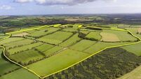 One of the largest farms to come on the market in Munster this year