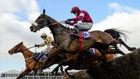 Seven Cheltenham fatalities to be assessed by horse racing authorities