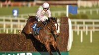 Three-time Festival winner Vautour put down after freak accident