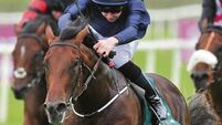 Aidan O'Brien may run Air Force Blue in shorter races after his disappointing Newmarket outing