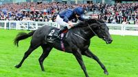 Aidan O'Brien nominates Morny target for still unbeaten Caravaggio