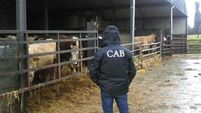 Criminal Assets Bureau seize 125 cattle from farmer who owed more than €4m in taxes and interest