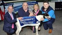 Four men arrested as €1m greyhound found safe and well