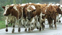 Ex-Oxford don trampled to death by cows