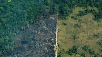 Environmental group claims forest fires in Bolivia have burned an area the size of Switzerland since August