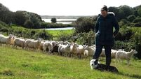 Being sheepish about her art: Orla Barry's new book looks at her life as an artist and farmer