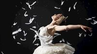 The depths of love: Ballet Ireland founder talks 21 years in business and touring Swan Lake