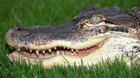 Australian teen attacked by crocodile after jumping into river for a dare