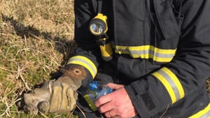 Firefighter who gave rabbit water says reaction 'is really humbling' as photo reaches over 1.2k likes