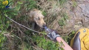 Watch the Howth Coast Guard go above and beyond duty to rescue dog from cliff