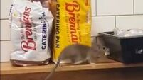 Dublin service station closes after video of rat on deli counter goes viral
