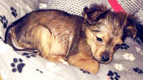 Two arrested after puppy beaten to death with hammer and put in microwave in Armagh