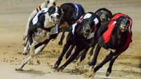 Dog owner challenges Irish Greyhound Board for witholding race prize money over doping allegation
