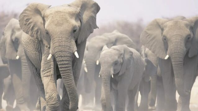 Donald Trump delays new policy on importing elephant trophies