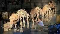 Mammoth sale! Four skeletons tipped to make up to €450,000