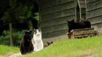 10 cats missing after hounds chasing fox and deer stampede through animal sanctuary