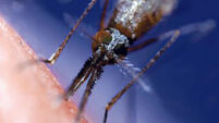Scientists in Germany improve malaria drug production