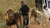 Lion mauls woman to death at South African animal sanctuary