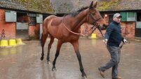 Cyrname primed to deliver in Ascot Chase