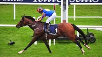 Aidan O'Brien looks to Irish Champions Stakes with Churchill
