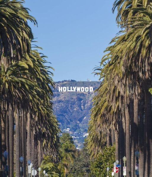 A photo of a palm tree lined street with the Hollywood sign in the background.