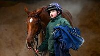 Tiger Roll thriving but Apple's Jade's days look numbered: Gordon Elliott on Cheltenham contingent