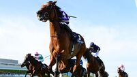 Expect another Magical moment from Aidan O'Brien