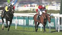 Boyne Hurdle return still on for Tiger Roll