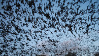 From devils to superheroes: our complicated relationship with bats