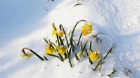 Snowed under in the garden: Unexpected benefits from the snow