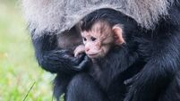 Fota Wildlife Park ask for public's help in naming their latest arrival