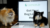 An Post launches service to buy dog licences online