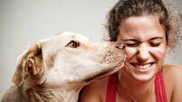 Creature comforts: Invest in the healing power of pets