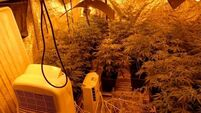 Three people arrested after cannabis grow house found in Co Sligo
