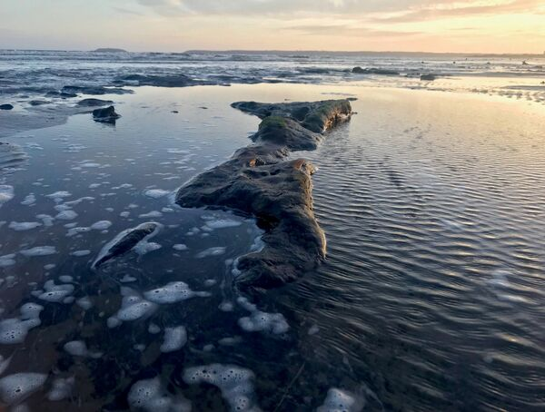 In recent weeks the receding waters at Claycastle beach have delivered an enthralling glimpse of the ancient terrain beneath the sand. Picture: Jessica Burke