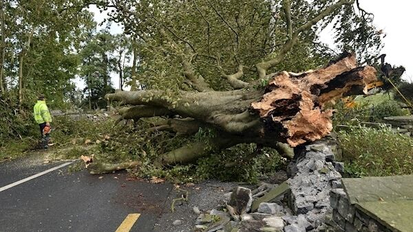 Local residents begin the clear up operation to clear roads after Storm Ali brought down several trees throughout Co Galway including this one on the main Tuam to Headford road. Photo: Ray Ryan
