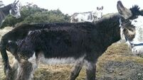 Donkeys found struggling to survive in patch of waste ground learn to live again