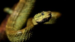 Indonesian police used snake to terrorise suspect