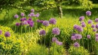 How to extend flowering season in your garden by staggering bulb planting