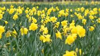 Donal Hickey: When does spring begin?