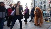 Orangutan takes to the streets of London after Iceland Christmas ad banned